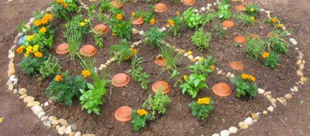 grow your own pizza garden - Pizza Garden